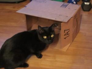 Piper near the new box