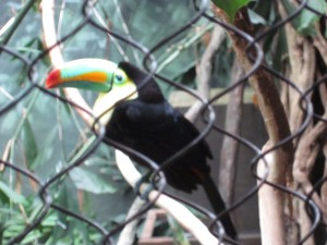 I completely fell in love with the toucan!