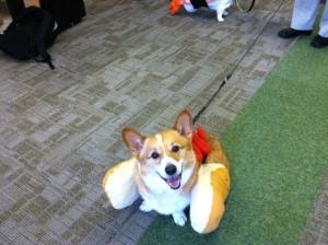 Baxter as a hot dog