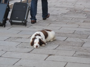 They have dogs in Italy too.  :)