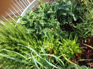 Our garden... the closeup view