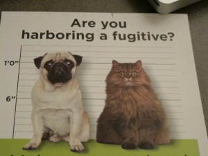 Are you harboring a fugitive?