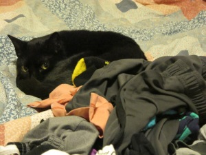 Are you guarding the laundry, Piper?
