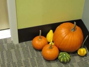 Our own personal indoor pumpkin patch