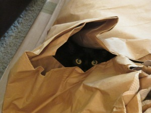 Is someone hiding in the packing paper??