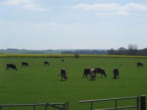 Peaceful English countryside...