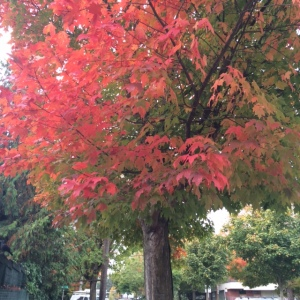 It's autumn in Seattle!