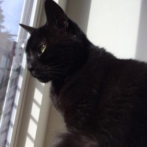 A very pensive Piper