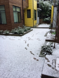 Snow!  With footprints in it!!  This NEVER happens!